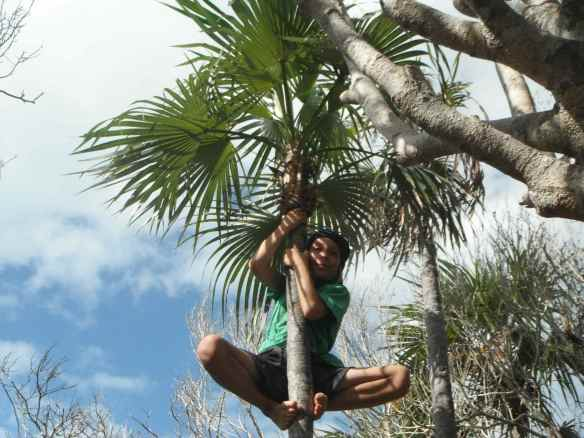 Cole climbing a palm tree. He keeps me supplied with coconut milk!