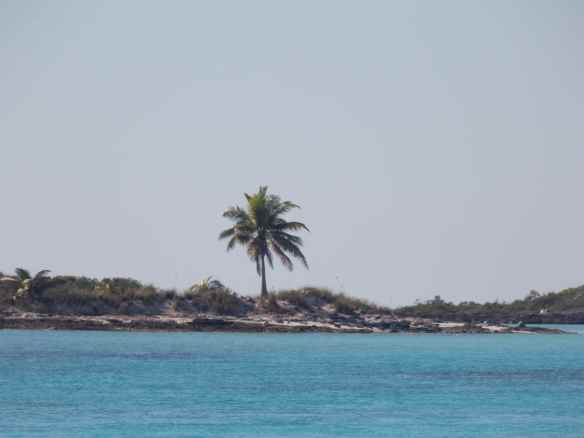 Lone palm tree on Allen's Cay.
