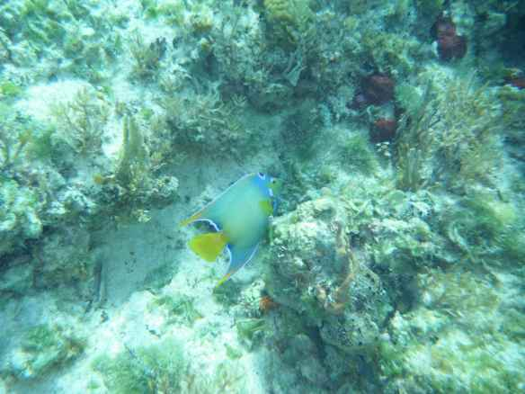 One of the many beautiful fish they saw snorkeling.