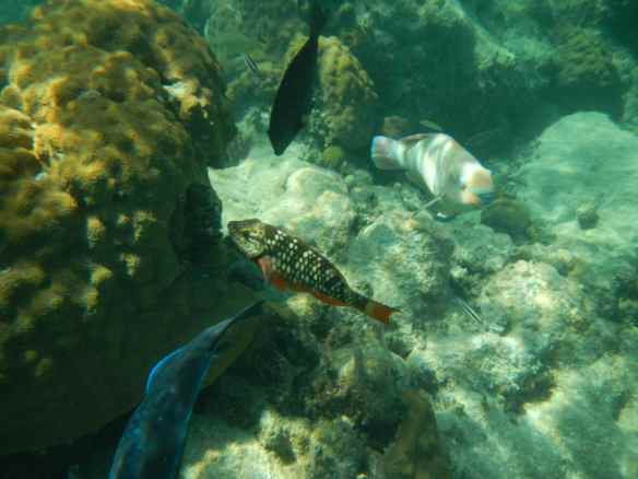 There was a big variety of fish on Mermaid Reef.