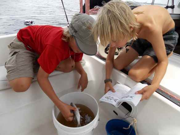 Logan holding the fish while Cole has the book out so they can identify it.