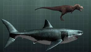 This is a megalodon compared to a T-Rex.