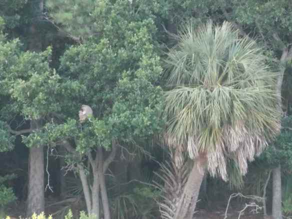 Some of the monkeys we saw on Morgan's Island.
