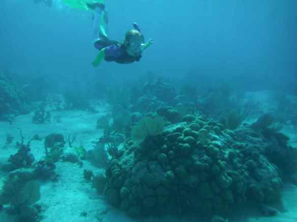 Reef exploration field trip.