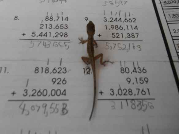Can kids get their schoolwork done while a lizard is crawling across their paper?  Absolutely.